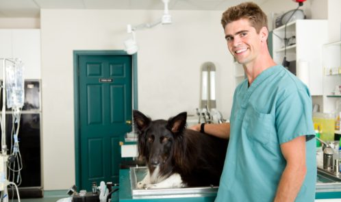 pet-health-advice-line-launches-to-make-unnecessary-trips-to-the-vet-a-thing-of-the-past
