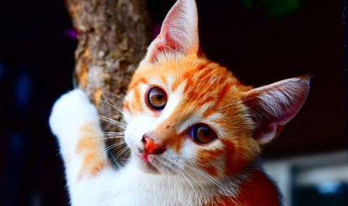cat-861634_640