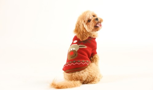Aldis New Matching Christmas Jumpers For Dogs And Owners Money