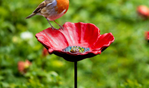 poppy-feeder-with-robin24
