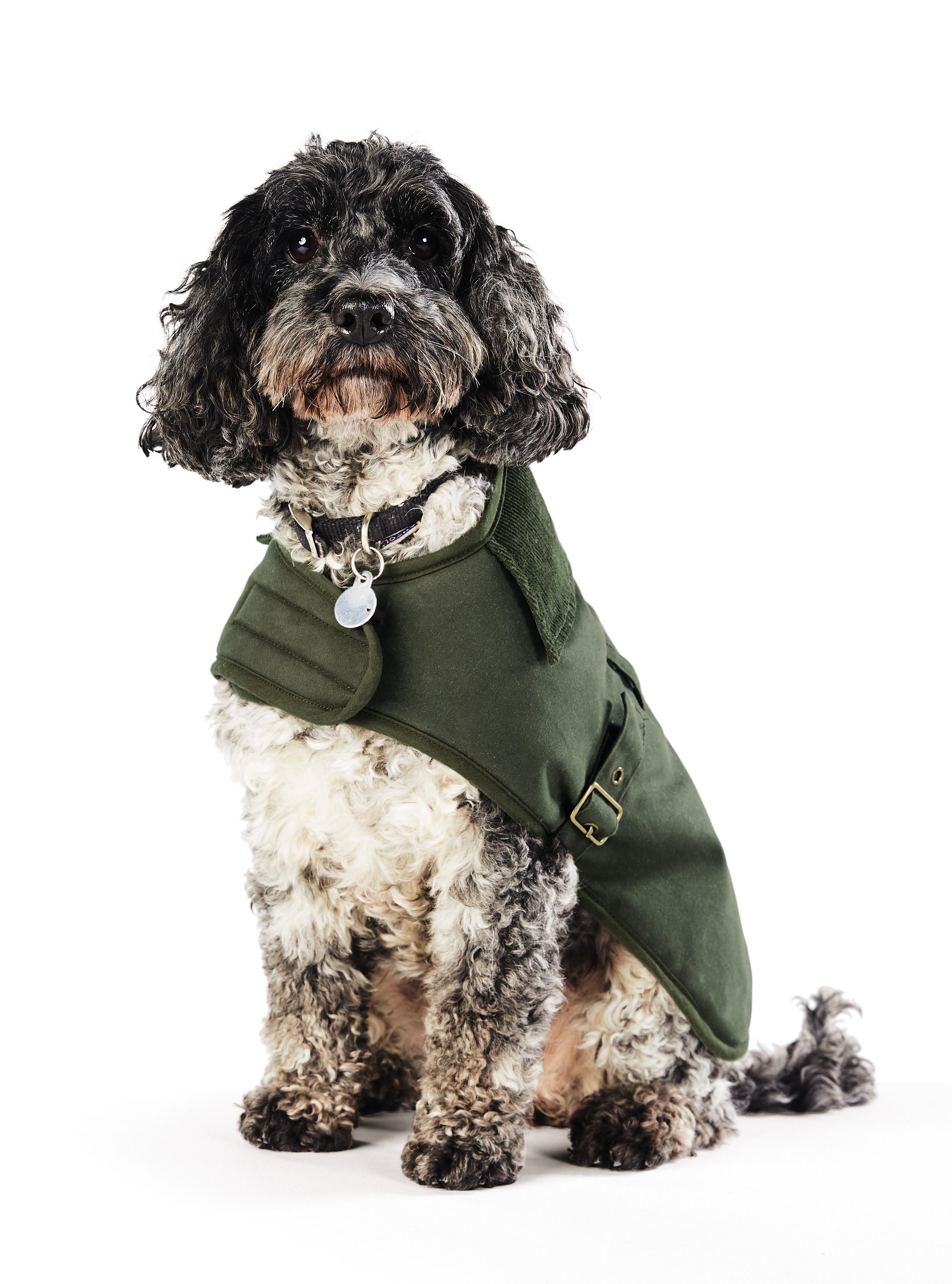 Get Your Paws On Aldi S Latest Pet Range Money Saving